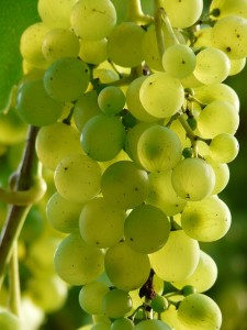 Il dibattito sulla frutta (parte 2) - Gli zuccheri