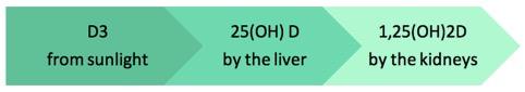 vitamina D3 trasformazione